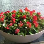 KNOCK - 一年中お花が咲くけやき坂