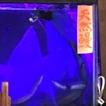 瓢六亭 - 天然鰻の水槽
