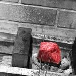 肉と葡萄酒 跳牛 - 近火の強火