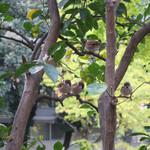 カフェ ラ・ボエム - テーブルを観察する雀たち