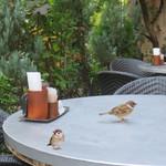 カフェ ラ・ボエム - 先ずお隣のテーブルへ・・