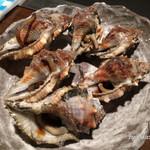 TAKO-SHOW - ミヤコボラ貝