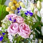78546188 - シックな色合いのピンクのバラも素敵ですね。