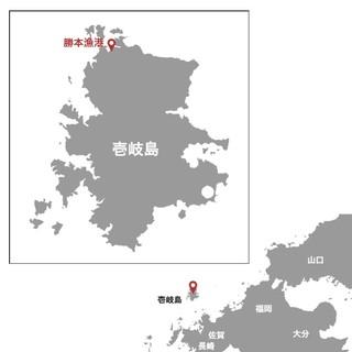 勝本漁港から独自のルートを開拓し直送!