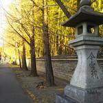 紫野源水 - 紫野界隈❗今宮神社さんが見えます。銀杏並木は終りました。