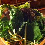 7863717 - サンパセット葉野菜