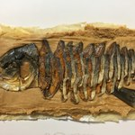 魚治 - 鮒寿し 甘露漬