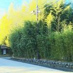 柳生の庄 - 竹林が柳生さんのトレードマーク