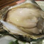 78765100 - 能登天然岩牡蠣