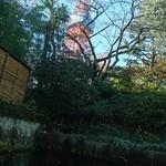 78837120 - 東京タワー見えますよ
