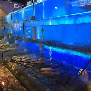 """水族館に負けない""""生簀""""には毎朝築地市場で仕入れる新鮮魚貝"""