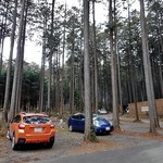 木もれびの里 箏路 - 駐車スペースも杉木立の中にあります