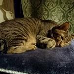 79133496 - 看板猫の太郎くん