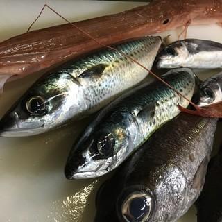 産地直送!天然の旬の魚たちが勢ぞろいです。