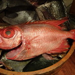 魚米 - 千葉の金時鯛