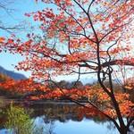 久保田屋酒店 - 栄村天池の紅葉