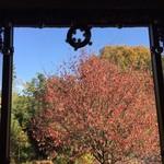 Living cafe Samantha - 借景  隣の緑地の紅葉