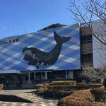 太地町立くじらの博物館 ミュージアムショップ - 2017年12月。訪問