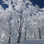 ろばた - 蔵王温泉スキー場