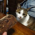 7986920 - ちょこぱん(カットした)と うちの猫ちゃん