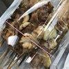 炭火焼き鳥 むぅちゃん - 料理写真:やきとり