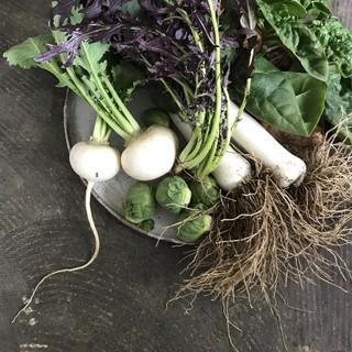 千葉サンバファームから届く新鮮野菜