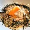 ギーモカフェ - 料理写真:温玉めんたいクリームパスタ