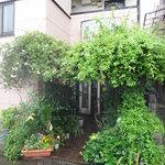ゴンジャ - 緑の多い外観