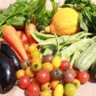鮮度抜群のお野菜
