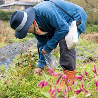 中東氏自らが、毎朝欠かさずに野山を駆け巡り収穫する山菜や木花