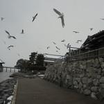 ペコリーノ - 食後寒い中湖岸へ…雪の浮御堂と鳥の餌やりタイムに遭遇しました。