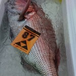 あぶりや - 1月30日、そして天然真鯛。1番美味しいサイズと言われている3kg前後。本日は2尾。水揚げ少ない中からも良品を買い付け出来ました。 写真は3㎏前後。