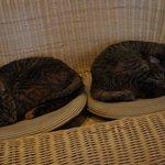 猫カフェ らぶねこ -