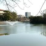 帝塚山珈琲館 - 張った氷を噴水が割ってる