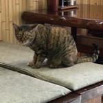 80336063 - 猫カフェ ならぬ 猫食堂                                         ニャンコ2匹が 自由にくつろいでます ^ ^                       ニャニ撮ってるん ニャ〜  (笑)