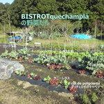 ビストロ くさむら - 当店の畑の野菜