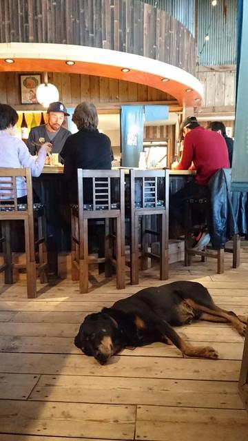 かねよ食堂・カフェ・アートスタジオ - 優しいジョンさんと 優しいワンちゃんのこっちゃん  二人はいつも 一緒❣️