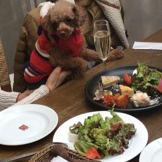 大好きなペットと一緒にテラス席で楽しくお食事!