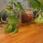 80898233 - 観葉植物
