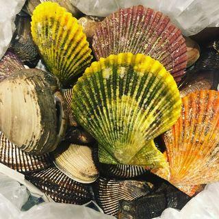 こだわりの貝類は毎日の仕入れで変わります♪