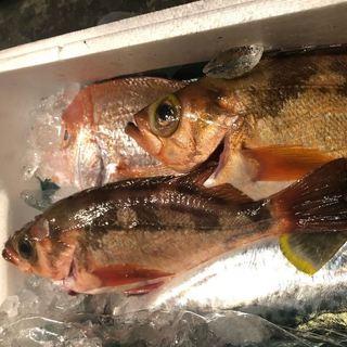 毎日仕入れる新鮮な魚をお愉しみいただけます!