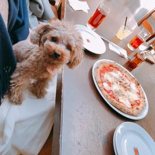 大好きなペットとテラス席で一緒に楽しくお食事!