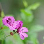 8117529 - 近傍(ちかく)の花