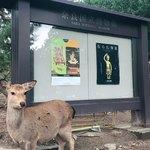 吉野本葛 天極堂 - ランチのあとは奈良国立博物館へ〜 東大寺のお水取りの企画展をやっていました^ ^