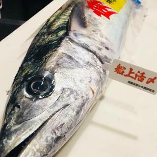 【築地入荷情報】千葉県産一本釣り船上活〆の鰆!