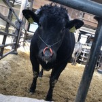 焼肉グレート - 研修で宮城県の黒毛和牛飼育農家にお邪魔しました!