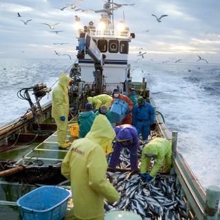 網元直送!!まるで漁師の家で楽しむ豪快な鮮魚料理