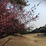 東海カントリークラブレストラン - 17番ホール 桃の花