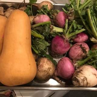 地元厚木の「しろくまファーム」こだわり野菜