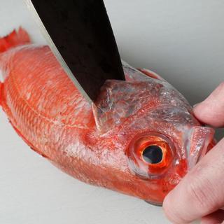 鮮度抜群◎『俺の魚を食ってみろ!!』